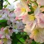 spring pink flowers 214528
