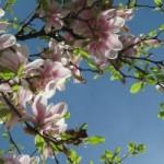 tree_flower_spring_216137